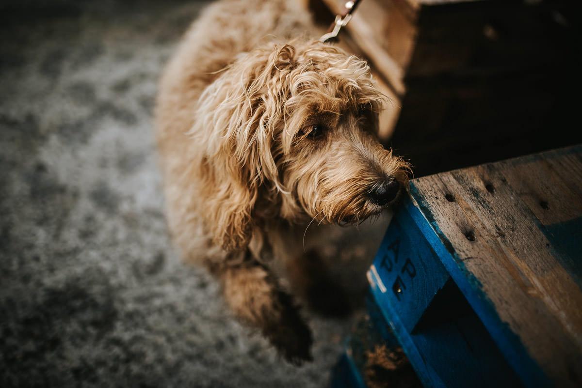 brick lane dog