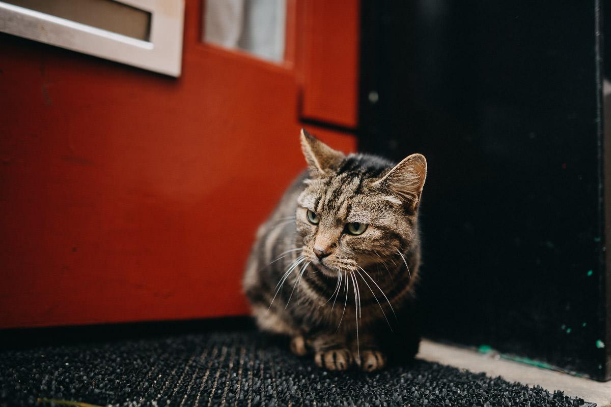brick lane cat