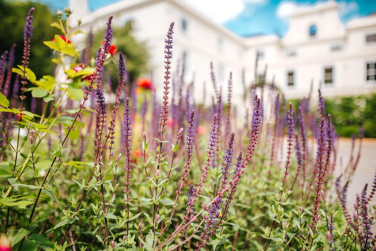 morden hall park flowers