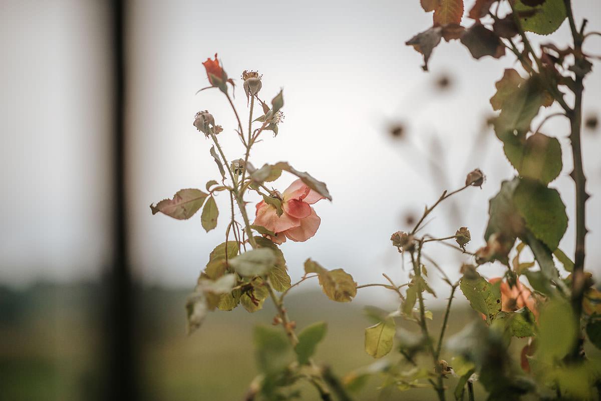 sopley mill wedding roses