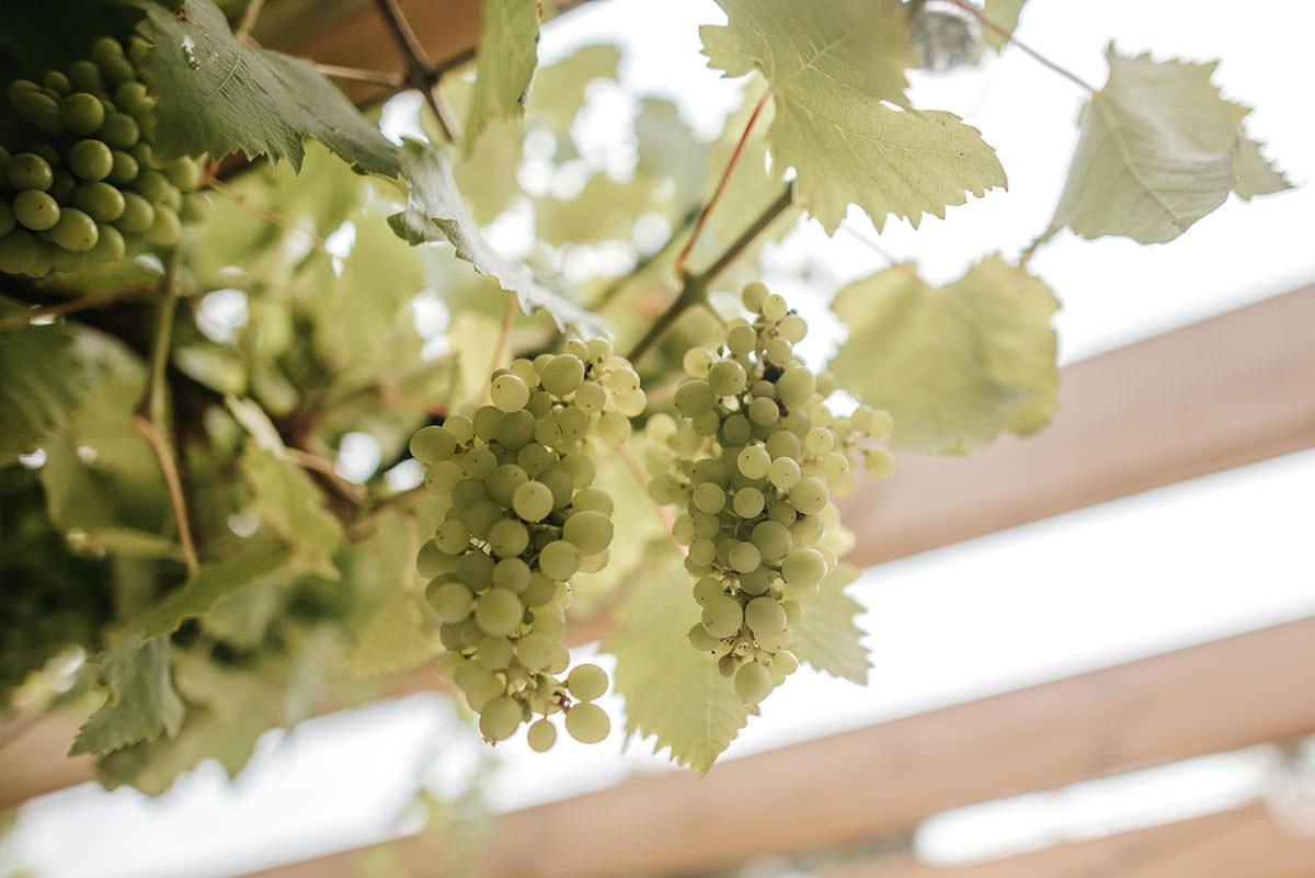 sopley mill wedding drinks reception grapes