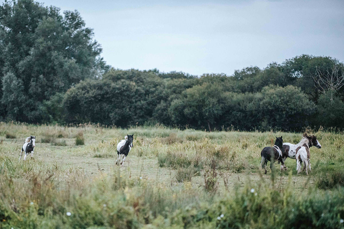 sopley mill wedding horses