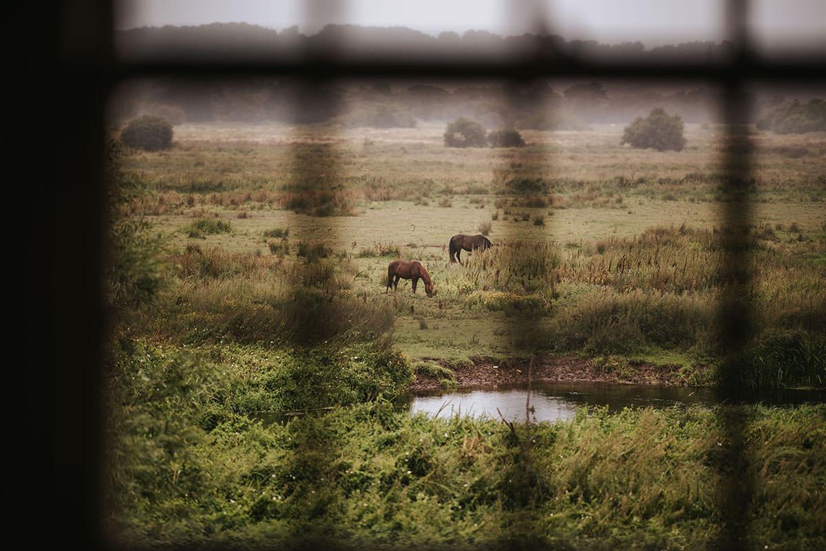 sopley mill wedding horses in the fields